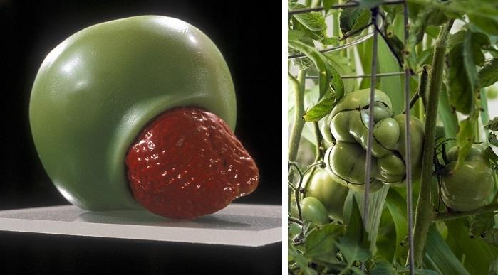 Z projektu Hybrids a Eden. (Zdroj: samvanaken.com)