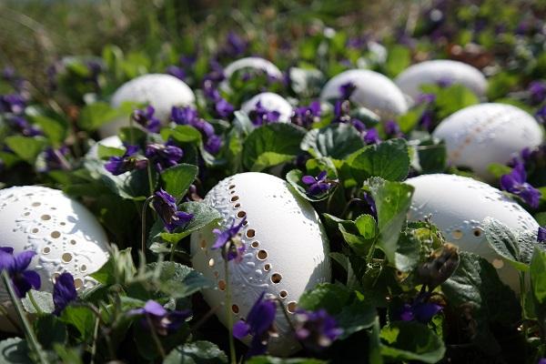 Bílá velikonoční vejce s dírkami.